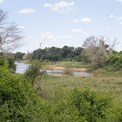 Levubu River - Kruger National Park