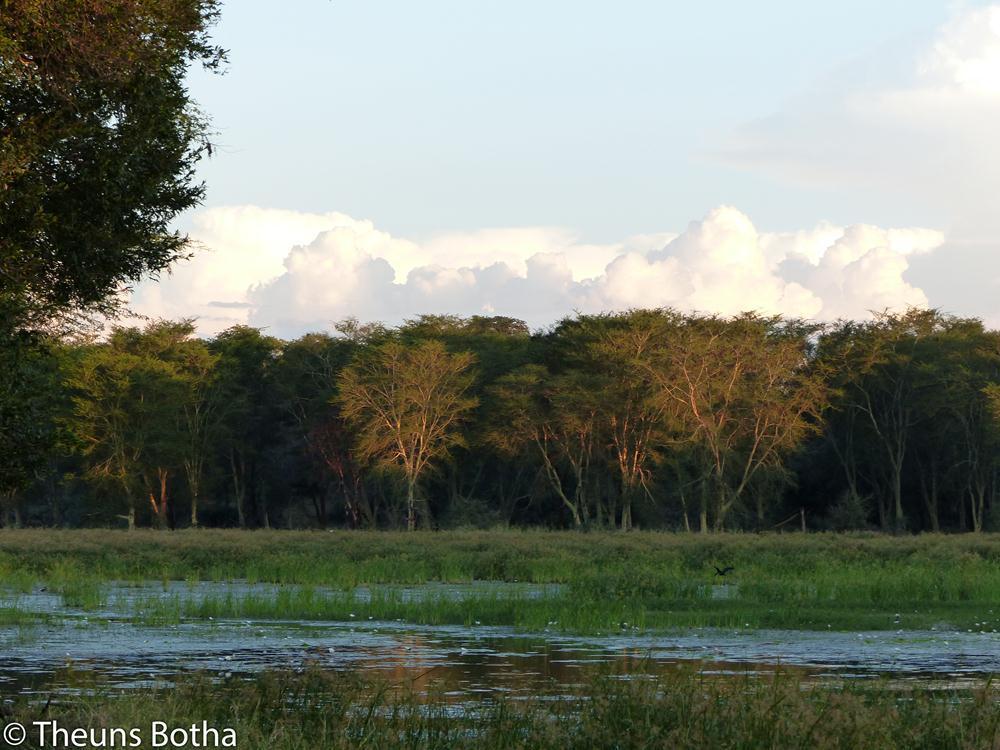 Fever tree forest - Pafuri Kruger National Park